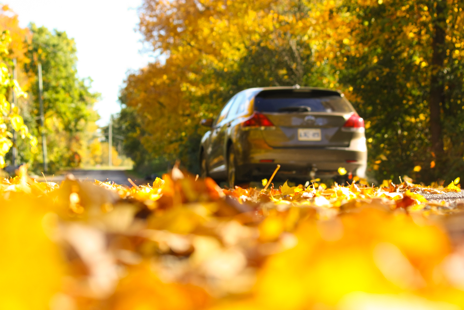 photo of a car driving through the blowing autumn leaves